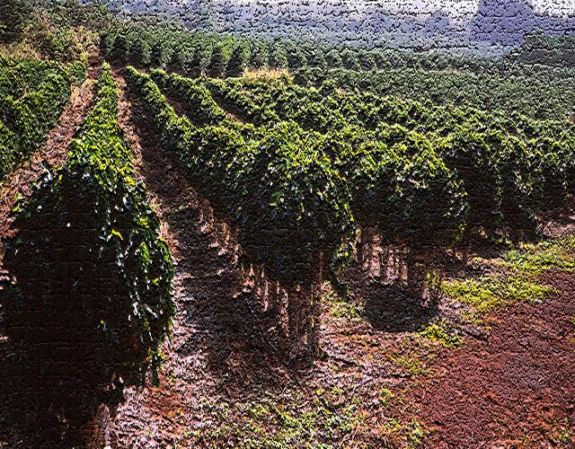 Coffee Valve Brazil Coffee Culture