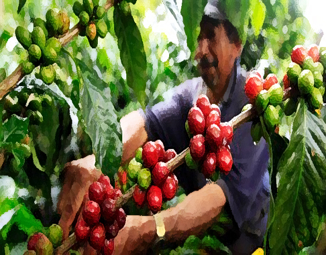 One Way Degassing Valve Columbia Coffee