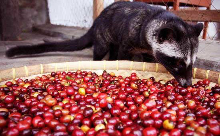 one way valve said civet coffee